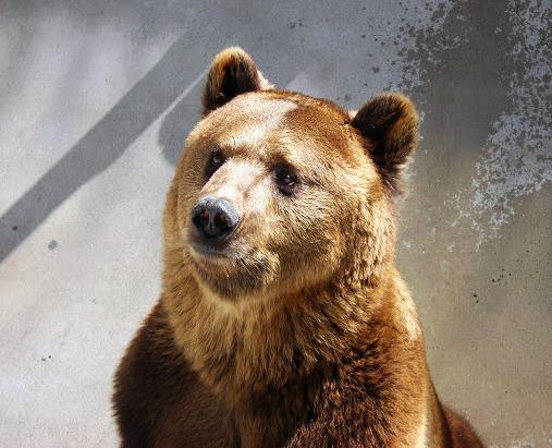 black forest bear park