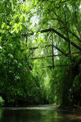 etowah river dawson forest
