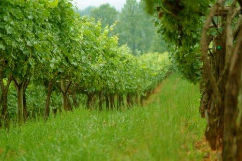 frogtown cellars vineyard dahlonega ga
