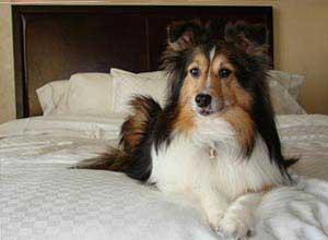 Dog Friendly Hotels In Helen Georgia