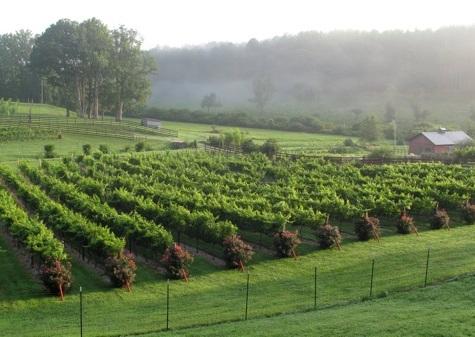 vineyards near helen ga