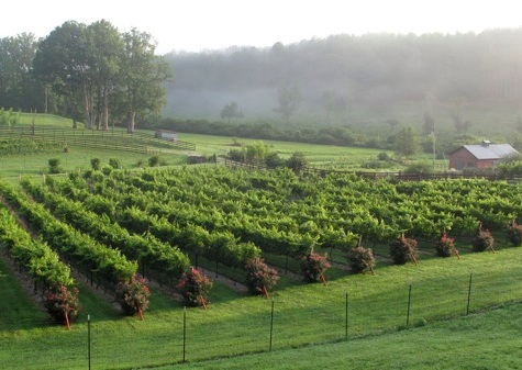 vineyards near helen ga