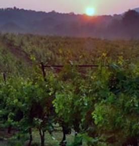 wineries in helen ga
