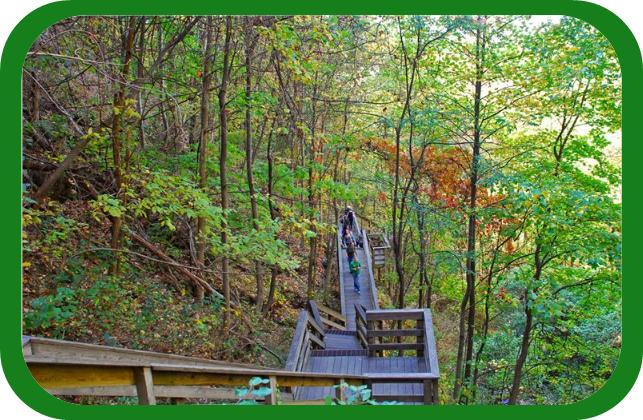 Amicalola Falls Cabins 4 Ways To Experience The Beauty