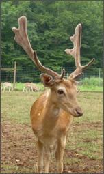 Amicalola-Deer-Park1