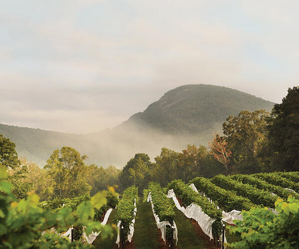 winery-north-georgia