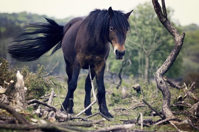 horseback-riding.jpg