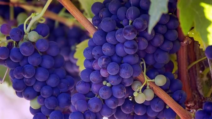 wine-tours-helen-ga.jpg
