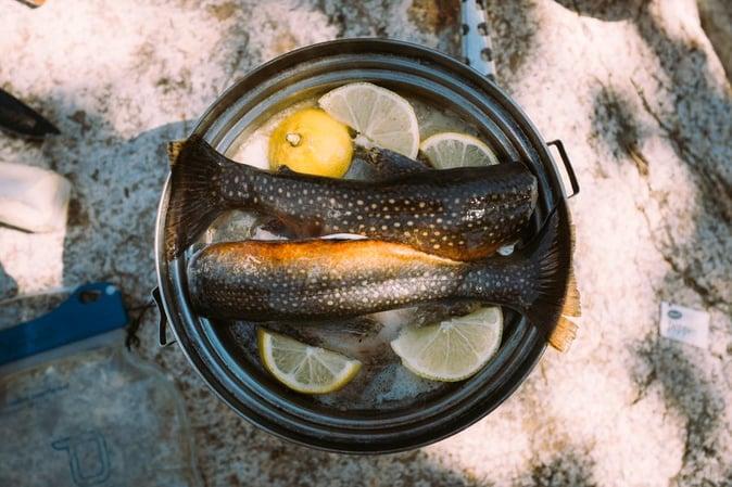 trout-fish.jpg