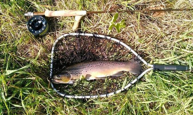 Trout Fishing At Duke's Creek