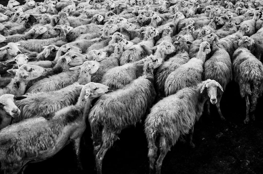 Planning_Oktoberfest_Herd of Goats_davide-ragusa-58052.jpg