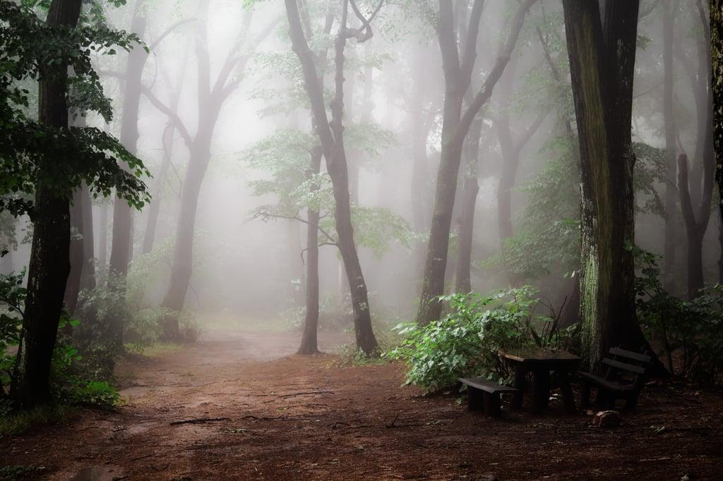 Woods_Isolated_UnS_goran-vucicevic-180641.jpg