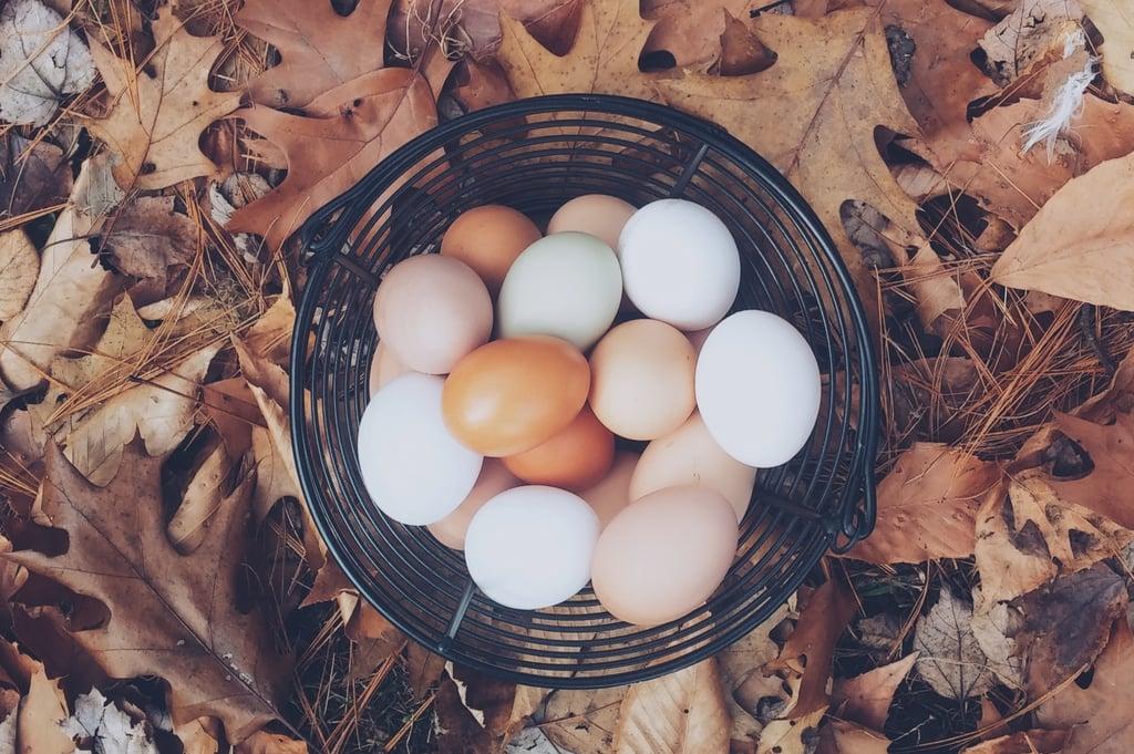 nest-egg-ss-autumn-mott-45386.jpg