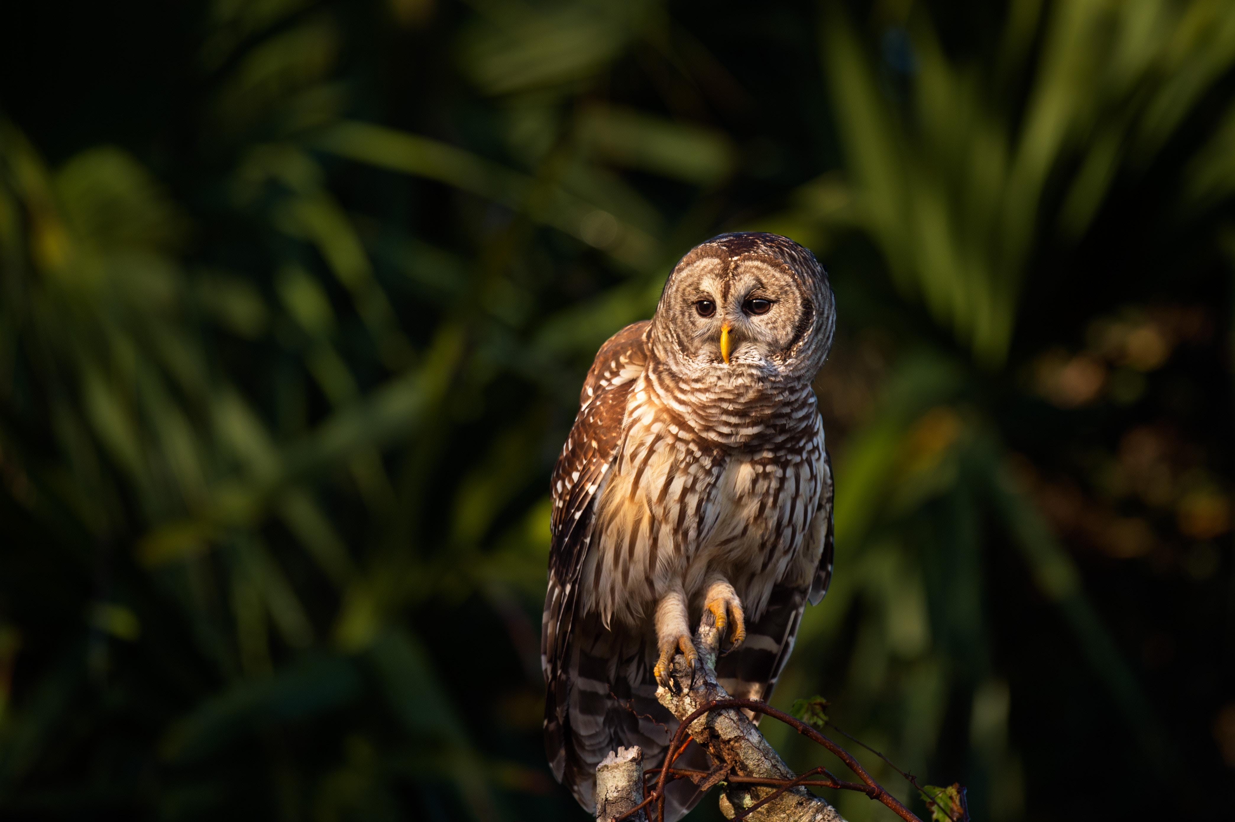 Bird-watching-owl-ray-hennessy-1480293-unsplash