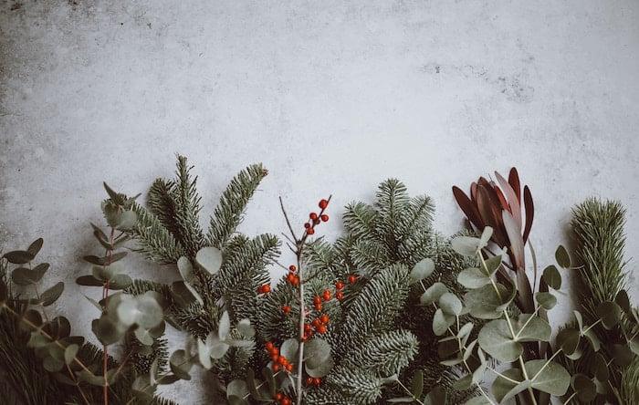 Christmas_Greens_Snow_annie-spratt-469222-unsplash
