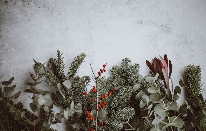 Christmas_Greens_Snow_annie-spratt-469222-unsplash