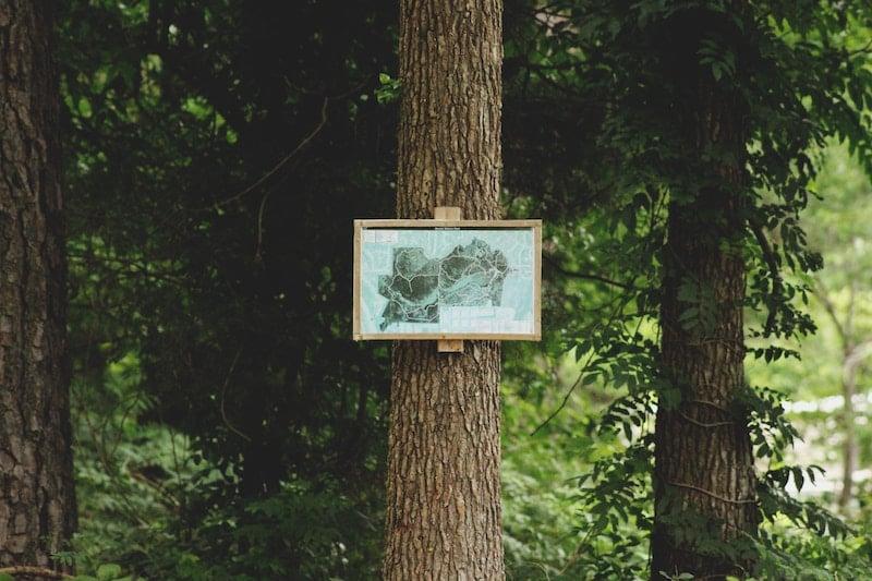 Dahlonega-forest-brandi-redd-l21fXySkyHo-unsplash