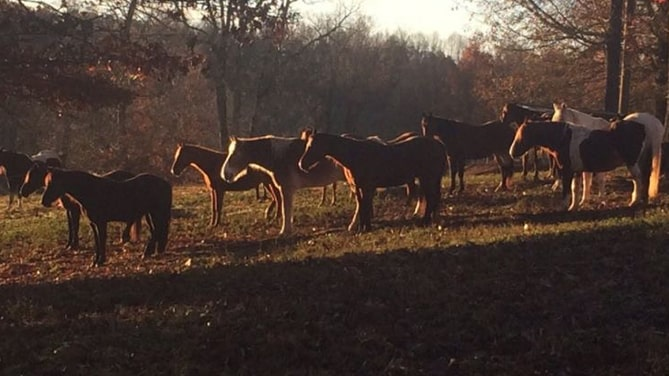 Sunburst-Stables-Helen-Georgia-Horseback-Riding-Cedar-Creek-Cabin-Rentals
