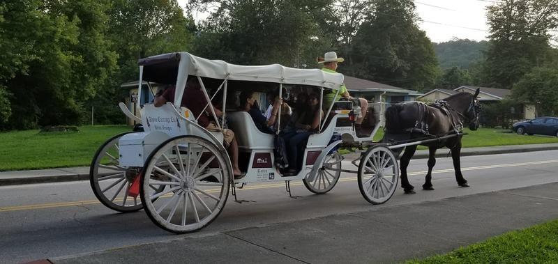 alpine-carriage-company-horse