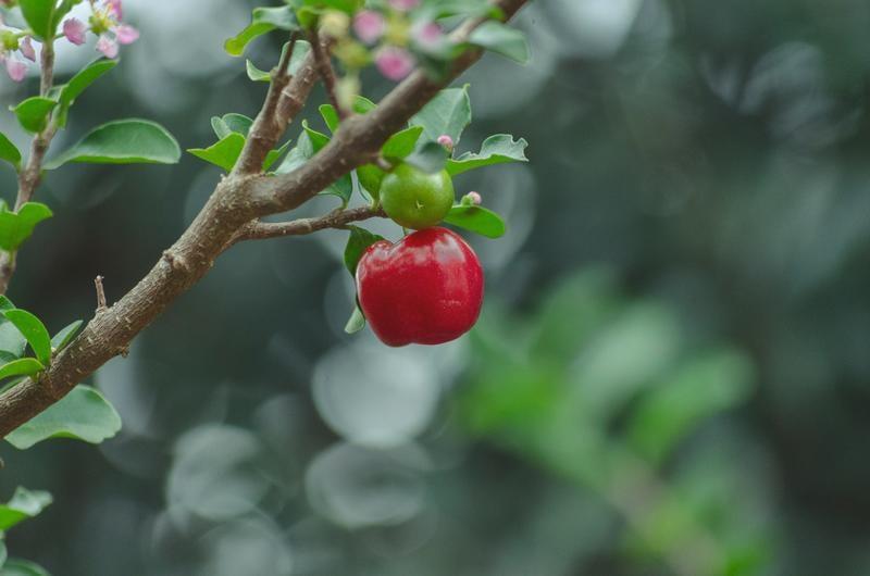 apple-fruit-tree-gabriel-597204-unsplash