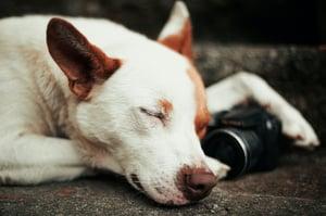 close-up-photo-of-dog-4036903