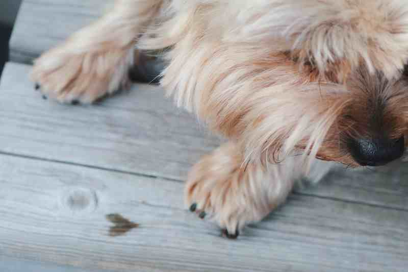 dog-close-wood-marlene-prusik-1382522-unsplash