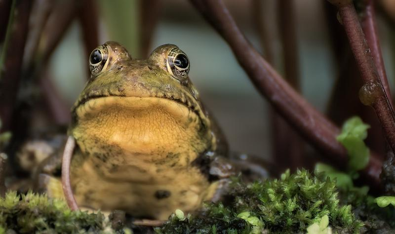 frog-robert-zunikoff-643662-unsplash