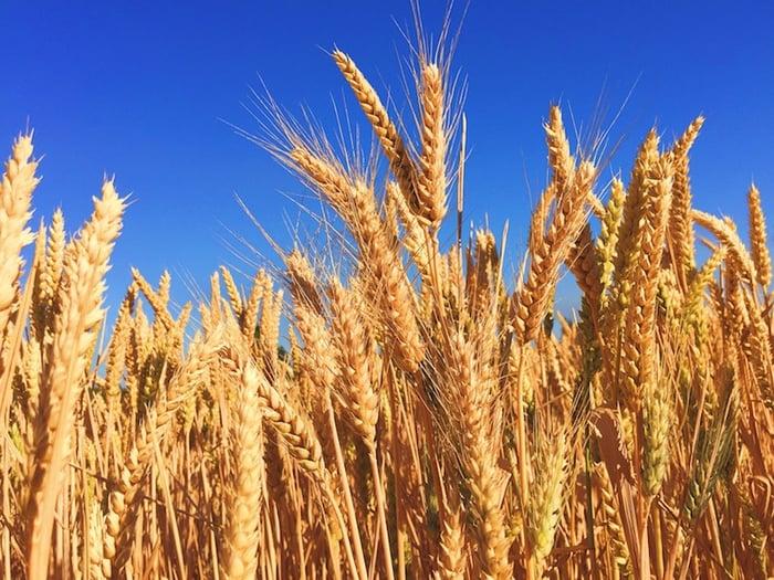 grain-melissa-askew-us