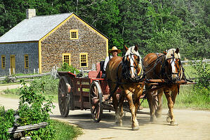 horse-drawn-cart-transportation-horse-preview