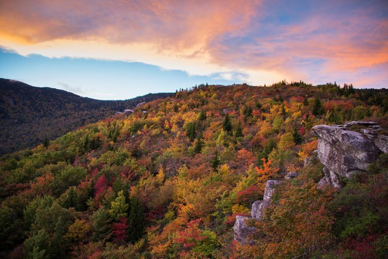 leaves-fall-forest-shutterstock_157673039