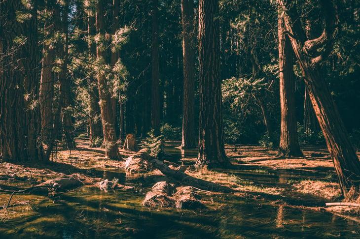 halloween-adventures-dark-woods-matt-antonioli-unsplash