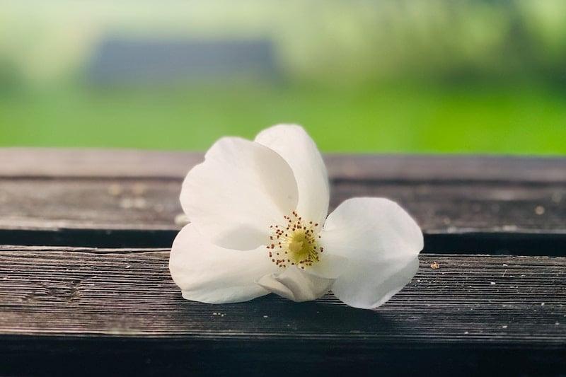 spa-flower-destress-duminda-perera-1649308-unsplash