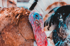 turkey_face_jorge-zapata-1297630-unsplash