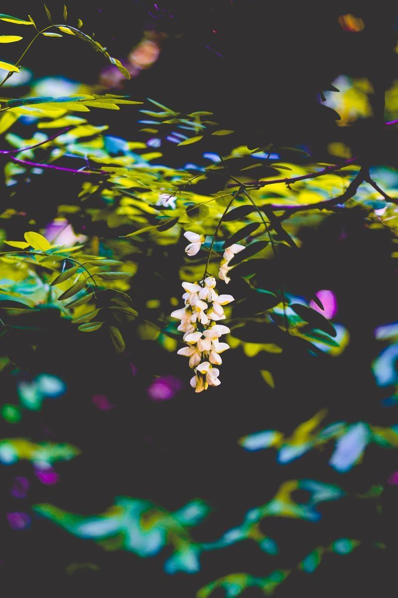 yonah-mountain-flowers-timothy-dykes-722543-unsplash