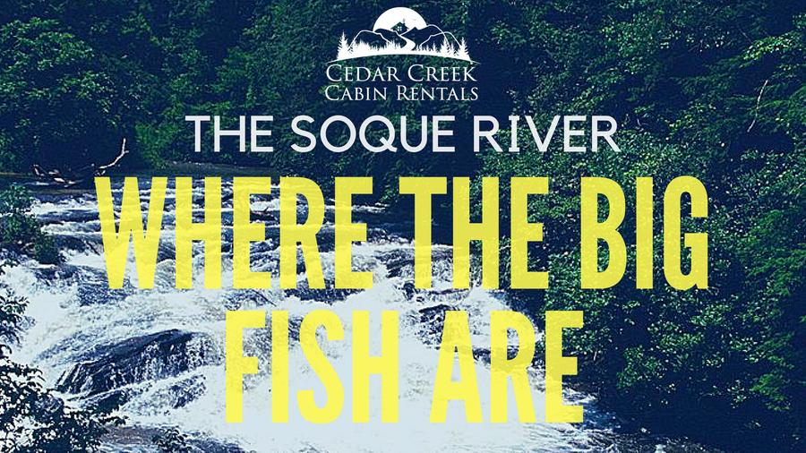 Soque River Fly Fishing: Where The Big Trout Are Within